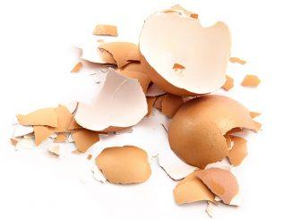 Jajčne lupine
